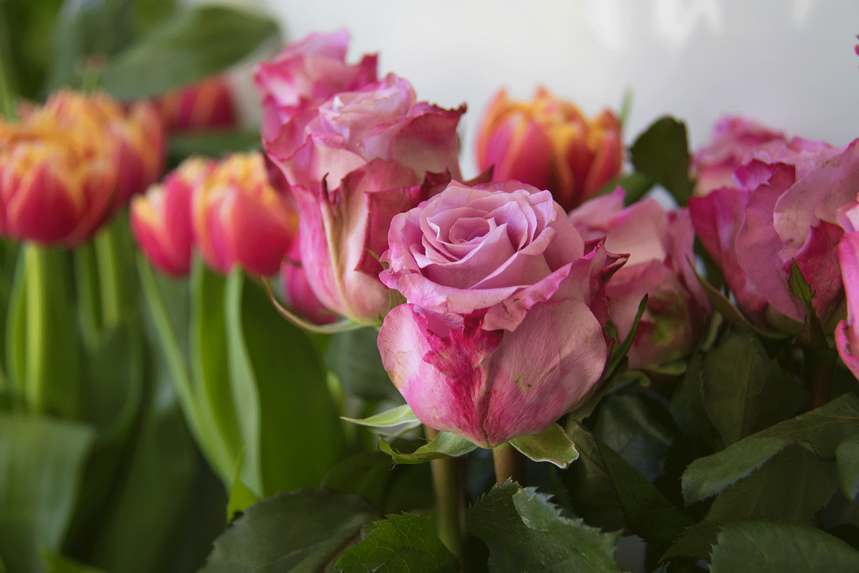 Fiorista piante e fiori a Bologna
